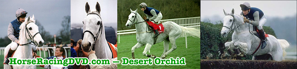 Desert Orchid