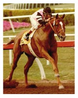 AFFIRMED's LOVE AFFAIR WITH HOLLYWOOD PARK - 5 RACES w/BONUS FOOTAGE