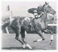 PHAR LAP: THE PEOPLES' CHAMPION