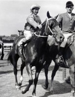 75 GREAT YEARS OF THE COX PLATE (1922-1996)
