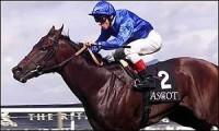 DUBAI MILLENNIUM: NO HORSE LIKE THIS HORSE