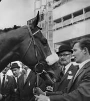 MILL REEF: SOMETHING TO BRIGHTEN THE MORNING