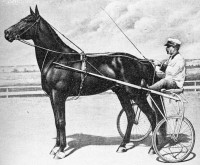GREAT DAN PATCH (The Movie)