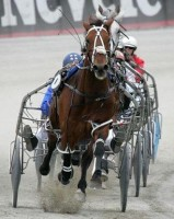 HORSE IN SPORT: HARNESS RACING