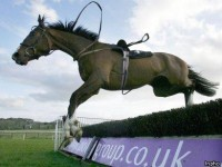 NATIONAL HUNT RACING REVIEW 1993-1994
