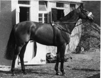 RED RUM: A NATIONAL HERO
