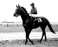 DR. FAGER 6-RACE TIME CAPSLUE