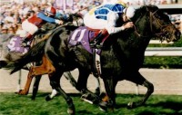 1993 BREEDERS' CUP (Entire Televised Broadcast from SANTA ANITA PARK)