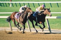 1990 BREEDERS' CUP (Entire Televised Broadcast from BELMONT PARK)