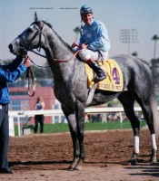 1984 BREEDERS' CUP (Entire Televised Broadcast from HOLLYWOOD PARK - FULL LENGTH Version)
