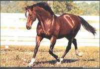 LITTLE HORSE, BIG HEART: THE STORY OF NORTHERN DANCER w/BONUS FOOTAGE