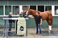 JUSTIFY 6-RACE TIME CAPSULE (18+ HOURS!!)